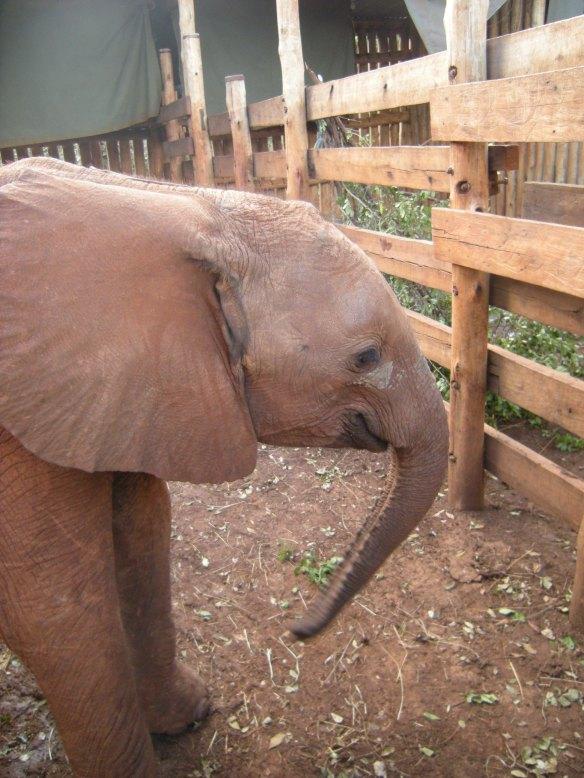 Dreaming of...Kenya